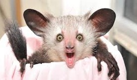 surprised animal